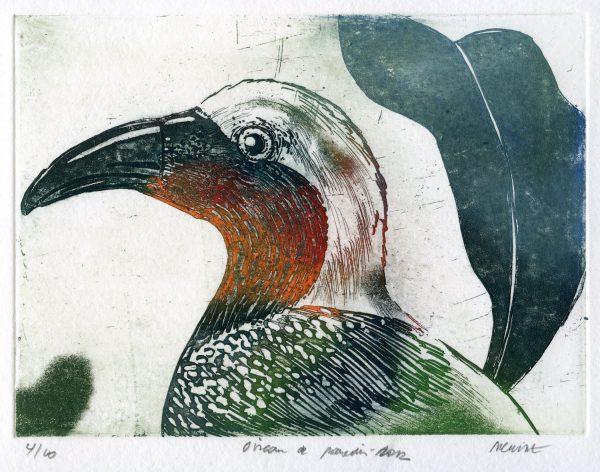 Robger Dewint - Oiseau de paradis - Graveur