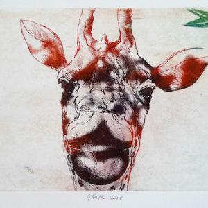 Roger Dewint - Girafe - Gravure
